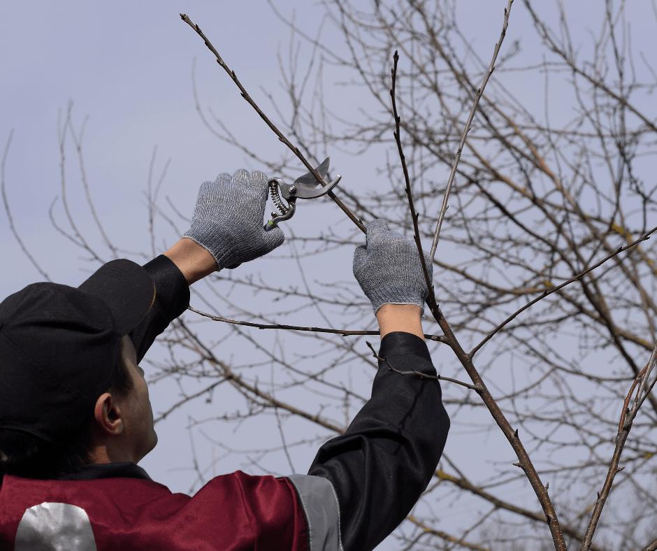 élagage arbres essonne